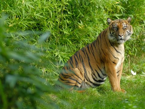 Bronx Zoo Tiger Tests Positive for Coronavirus
